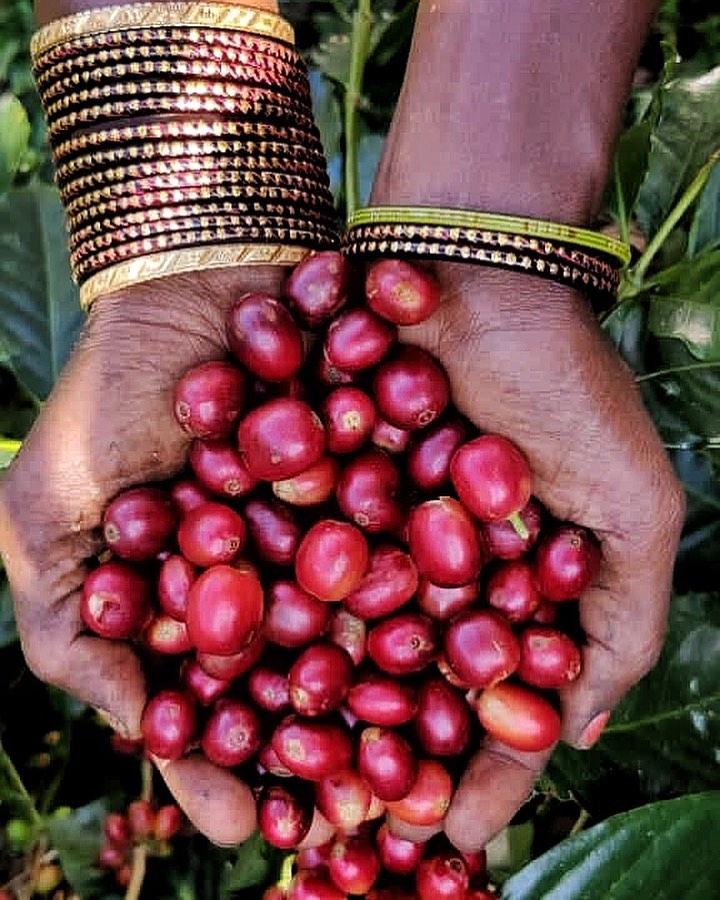 Coffee from India